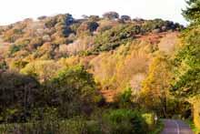 http://www.gelstoncastle.com/images/autumntorglassroad1.sm.jpg